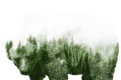 Floresta triste do urso Imagens de Stock