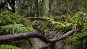 Floresta tropical úmida do relict filme
