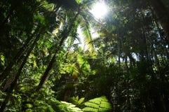 Floresta tropical Imagem de Stock
