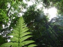 Floresta tropical   Fotografia de Stock Royalty Free