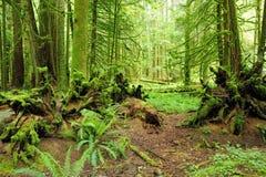 Floresta tropical Fotos de Stock