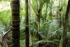 Floresta tropical Fotos de Stock Royalty Free
