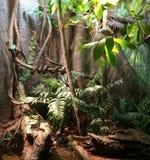 Floresta tropical Fotografia de Stock