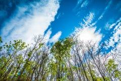 Floresta tropical Foto de Stock