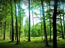 Floresta tropical bonita Imagens de Stock Royalty Free