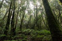 Floresta tropical bonita em fugas de natureza Ang Ka Doi Inthanon, Chian Fotos de Stock Royalty Free