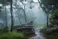 Floresta tropical com névoa, névoa foto de stock