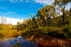Floresta tropical contra o céu azul Fotografia de Stock Royalty Free