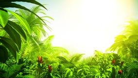 Floresta tropical crescente, animação 3d ilustração do vetor