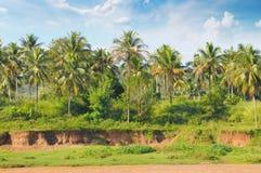 Floresta tropical da palma fotografia de stock