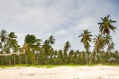 Floresta tropical da palma na praia branca da areia fotografia de stock