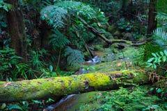 A floresta tropical de Bornéu, musgo cobriu branchs das raizes na selva do parque nacional de Kubah, Sarawak, Malásia fotografia de stock royalty free