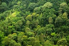 Floresta tropical de cima de Foto de Stock Royalty Free