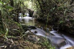 Floresta tropical tropical de Colômbia foto de stock