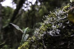 Floresta tropical tropical de Colômbia imagens de stock royalty free