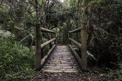 Floresta tropical tropical de Colômbia fotografia de stock royalty free