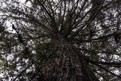 Floresta tropical tropical de Colômbia fotografia de stock