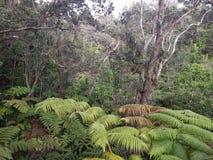 Floresta tropical de Havaí fotos de stock