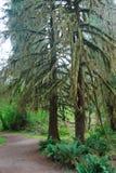 Floresta tropical de Hoh Foto de Stock Royalty Free