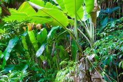 Floresta tropical densa imagem de stock