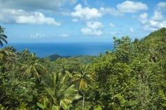 Floresta tropical e oceano Imagem de Stock