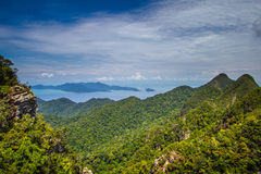 Floresta tropical em Langkawi imagens de stock