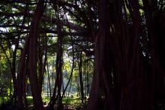 Floresta tropical escura fotografia de stock royalty free