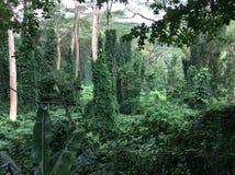 Floresta tropical, Havaí imagens de stock