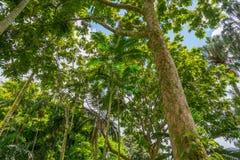 Floresta tropical havaiana no Koolaus Imagem de Stock Royalty Free