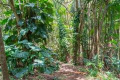 Floresta tropical havaiana no Koolaus Imagens de Stock Royalty Free