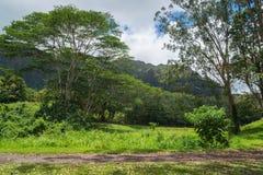 Floresta tropical havaiana no Koolaus Fotografia de Stock