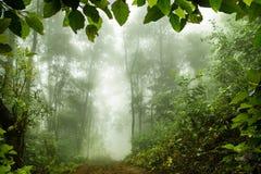 Floresta tropical musgoso, foco macio Fotografia de Stock Royalty Free
