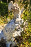 Floresta tropical na ilha de Vancôver, Columbia Britânica, Canadá imagem de stock royalty free