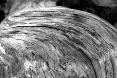 Floresta tropical na ilha de Vancôver, Columbia Britânica, Canadá fotografia de stock royalty free
