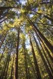 Floresta tropical na ilha de Vancôver, Columbia Britânica, Canadá Fotografia de Stock