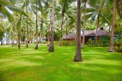 Floresta tropical no Indonesian imagem de stock