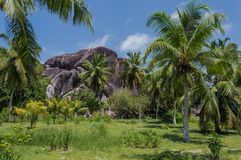 Floresta tropical, no La Digue, Seychelles Foto de Stock Royalty Free