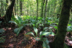 Floresta tropical no parque nacional de Canaima, Venezuela fotografia de stock royalty free
