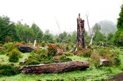 Floresta tropical, o Chile fotos de stock