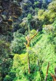 Floresta tropical, rwanda, ?frica imagem de stock royalty free
