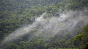 Floresta tropical sob a nuvem filme