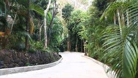 Floresta tropical, Tailândia fotografia de stock