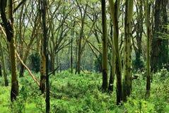 Floresta tropical, Tanzânia, África foto de stock