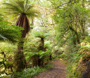 Floresta tropical temperada Fotos de Stock Royalty Free