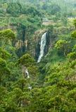 floresta tropical verde do musgo da pedra da cachoeira fotos de stock royalty free