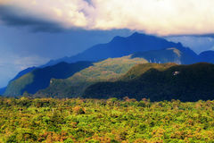Floresta tropical verde selvagem Bornéu Fotos de Stock Royalty Free