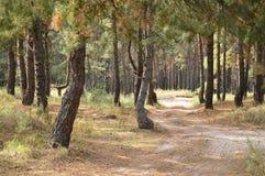 Floresta ucraniana Imagem de Stock