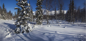 Floresta Urals9 norte da montanha do inverno Fotografia de Stock Royalty Free