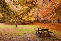 Floresta vazia na queda Imagem de Stock Royalty Free