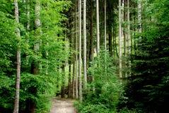 Floresta velha fotos de stock